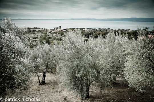 Olives on lake Bolsena shores